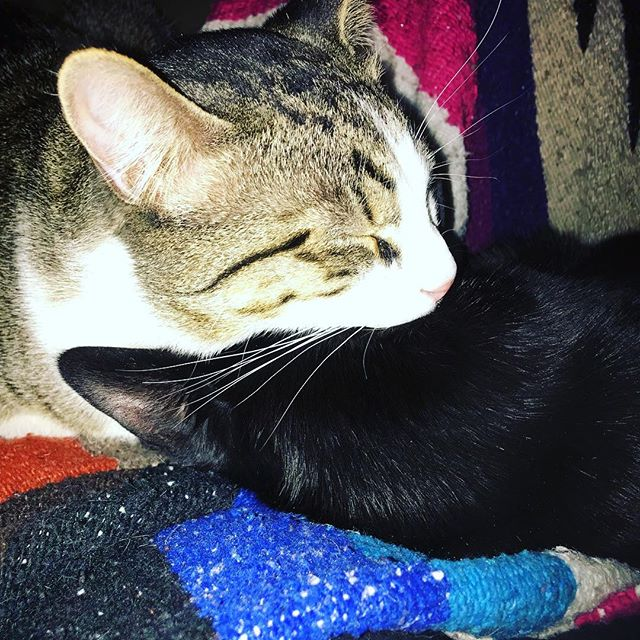 Brotherly love 💕 #brotherlylove #catlove #percy #ruben @whynottim