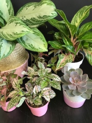 Loyalty program - Plant collectors earn progressive discounts for frequent purchases. Inquire in the shop and let your collection grow!