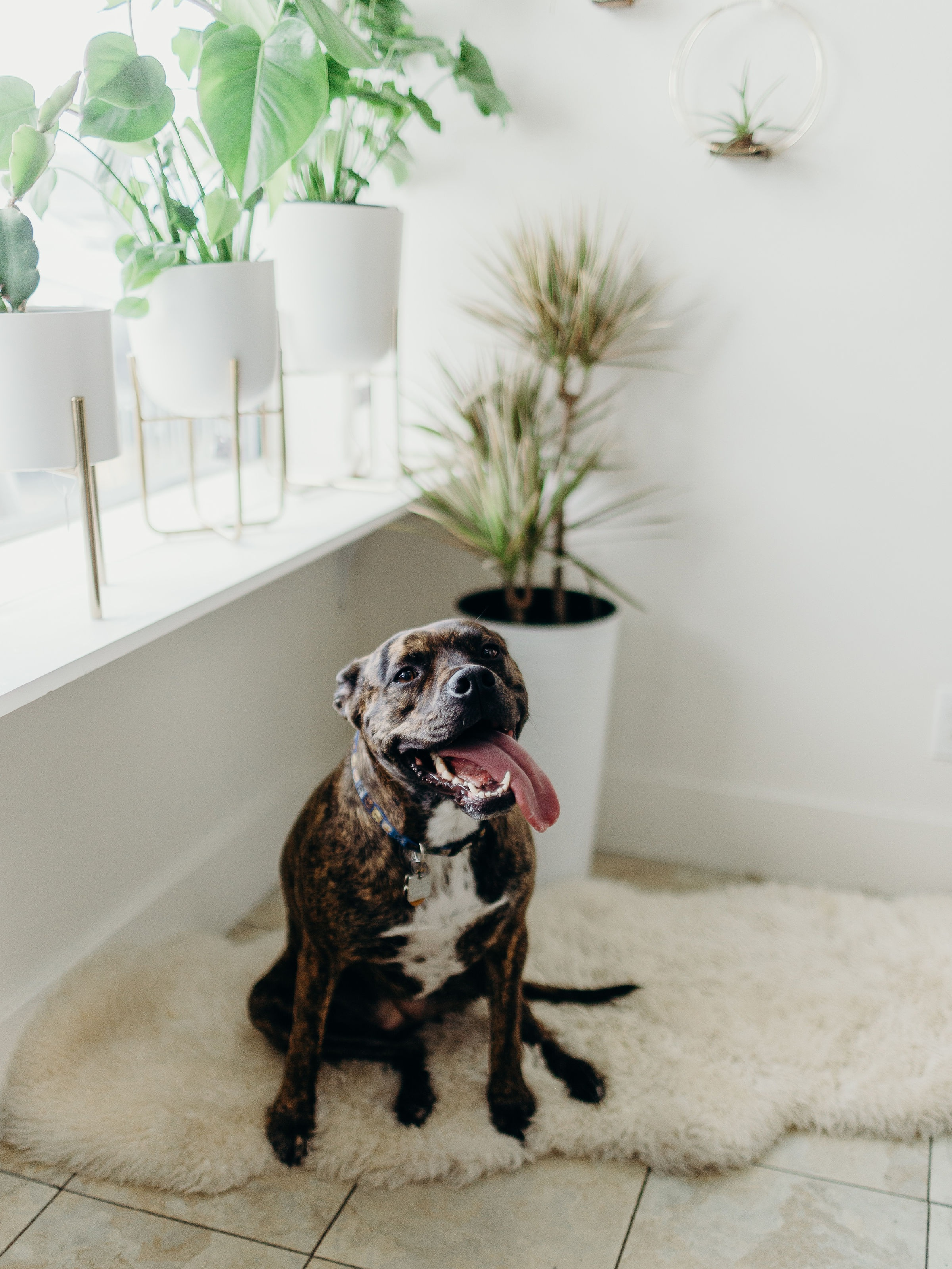 """Ask a professional - But some plants can be toxic to curious pets. A question I get asked frequently is """"which plants are safe for my pet?"""" I posed the same question to University Place Veterinary Hospital who gave this response. """"Thanks for looking out for the pets! Here's some good websites that are trustworthy."""""""