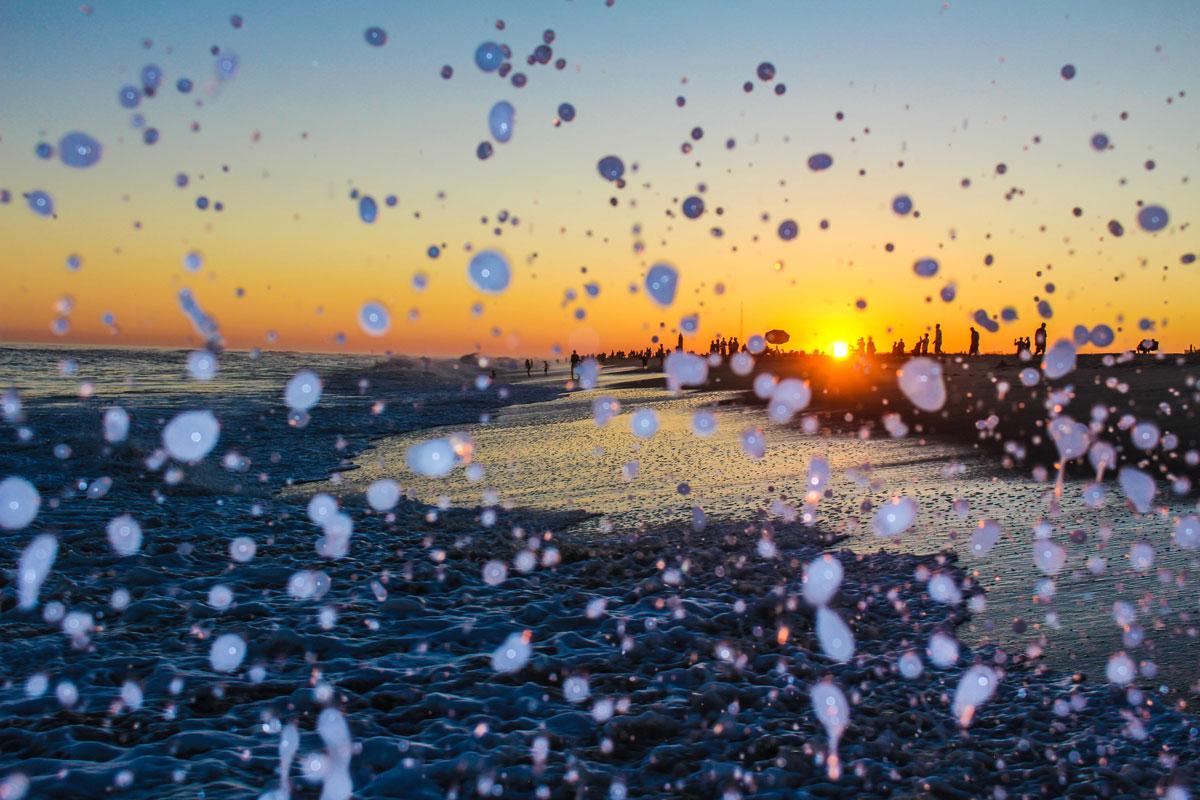 Olivia_Beaton_Photographer_Cape_Cod_Sunset_2.jpg
