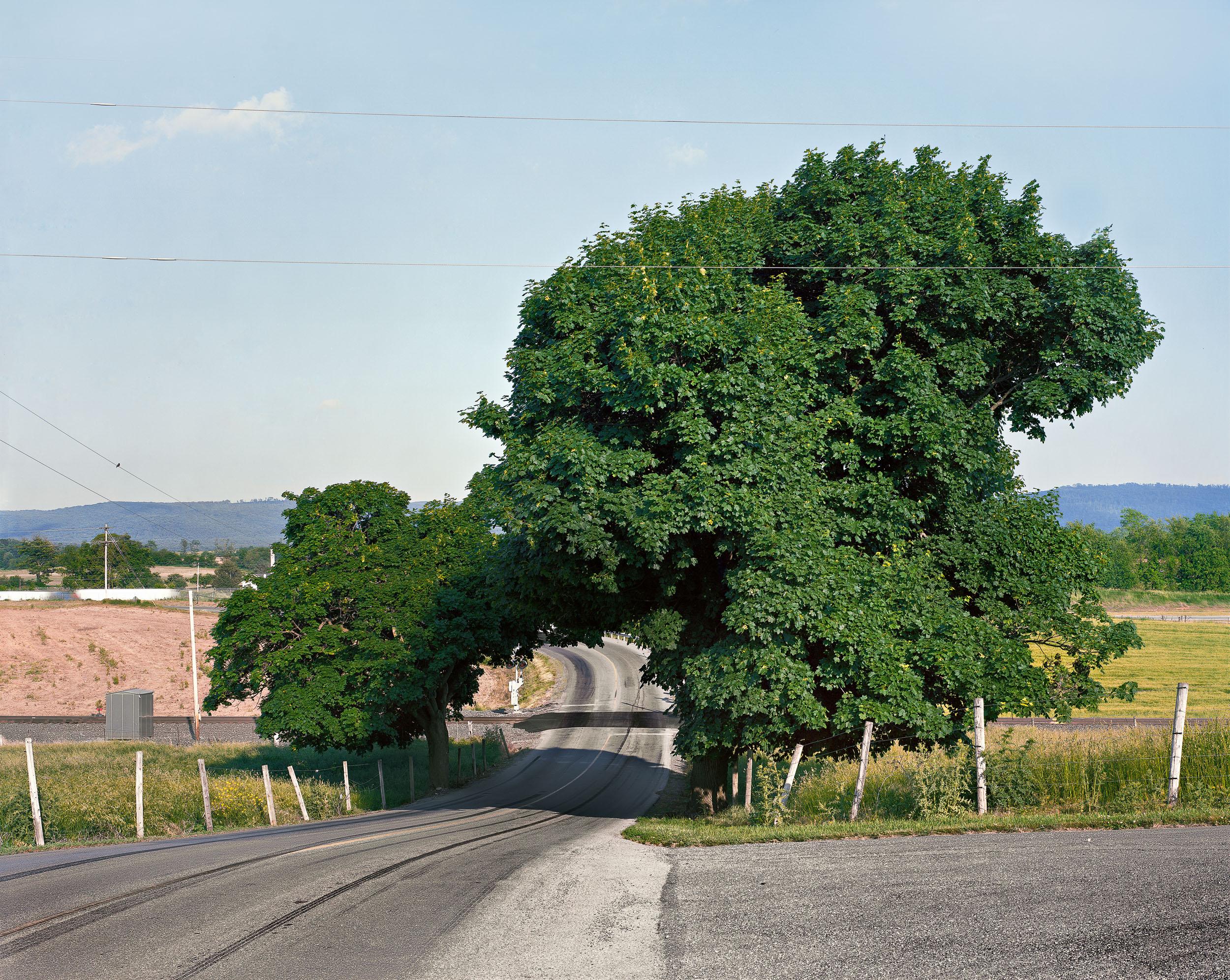 Tree along I-80, Maryland