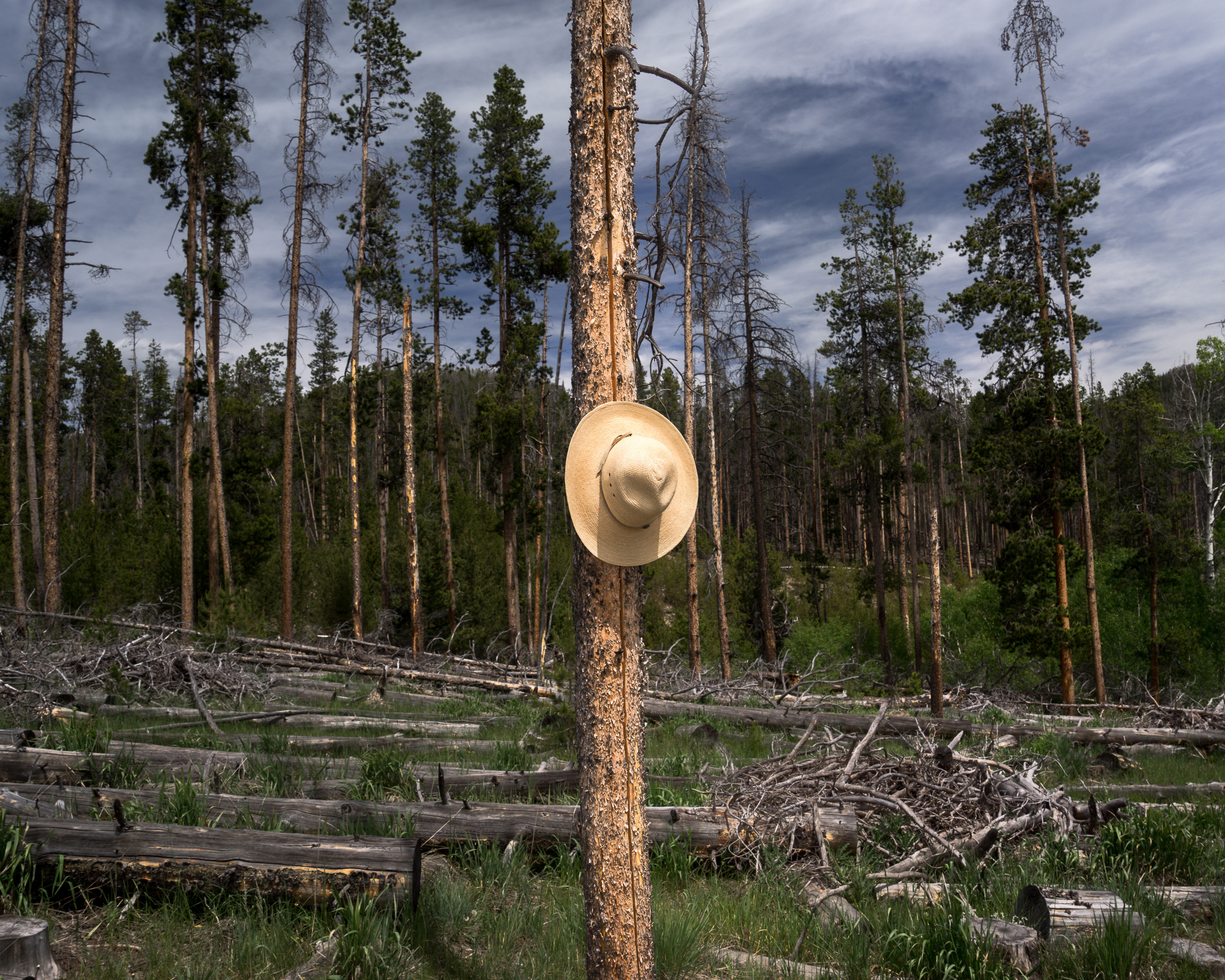 Beetle Kill, Medicine Bow Forest, Wyoming