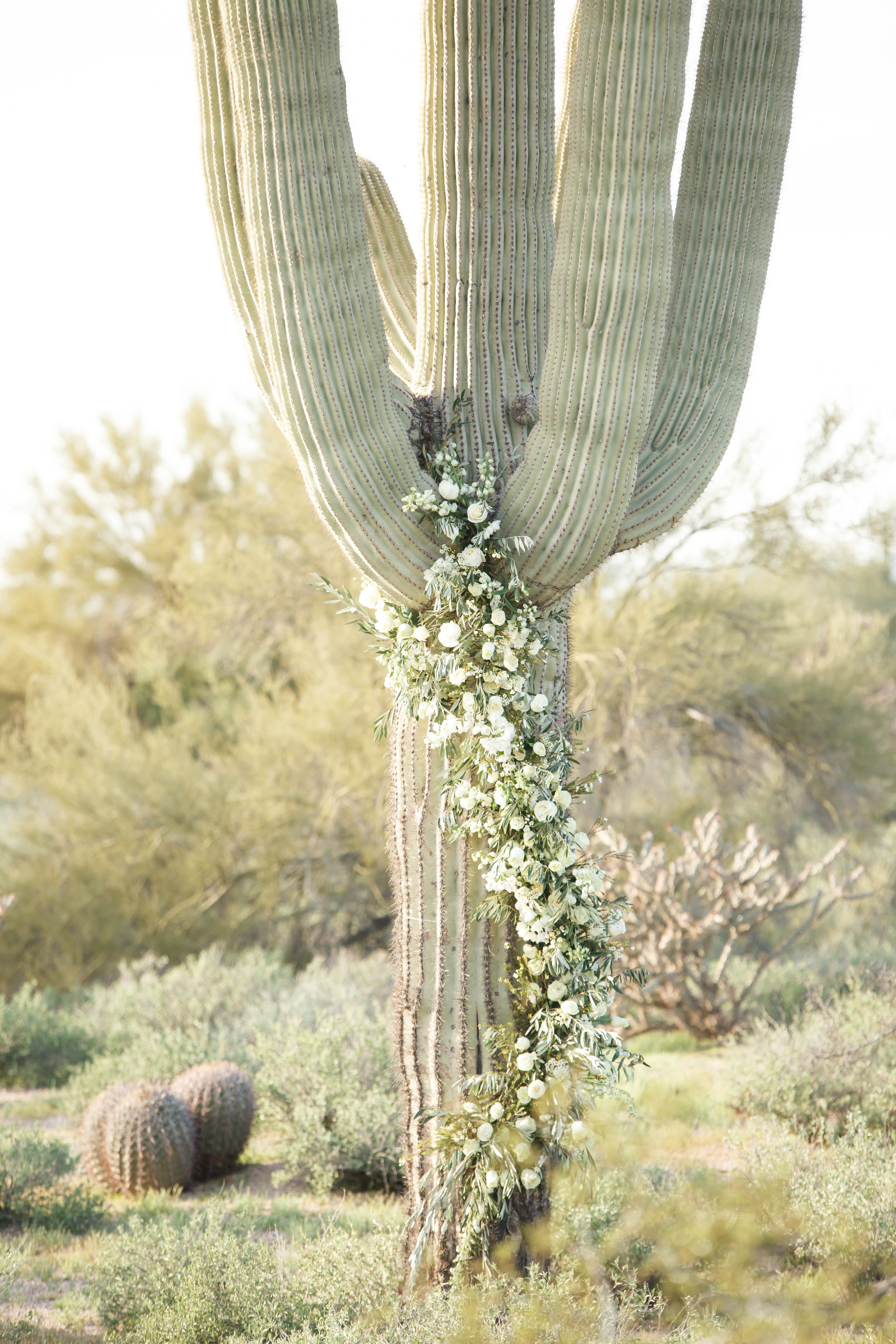 Cactus Decorated with Flowers