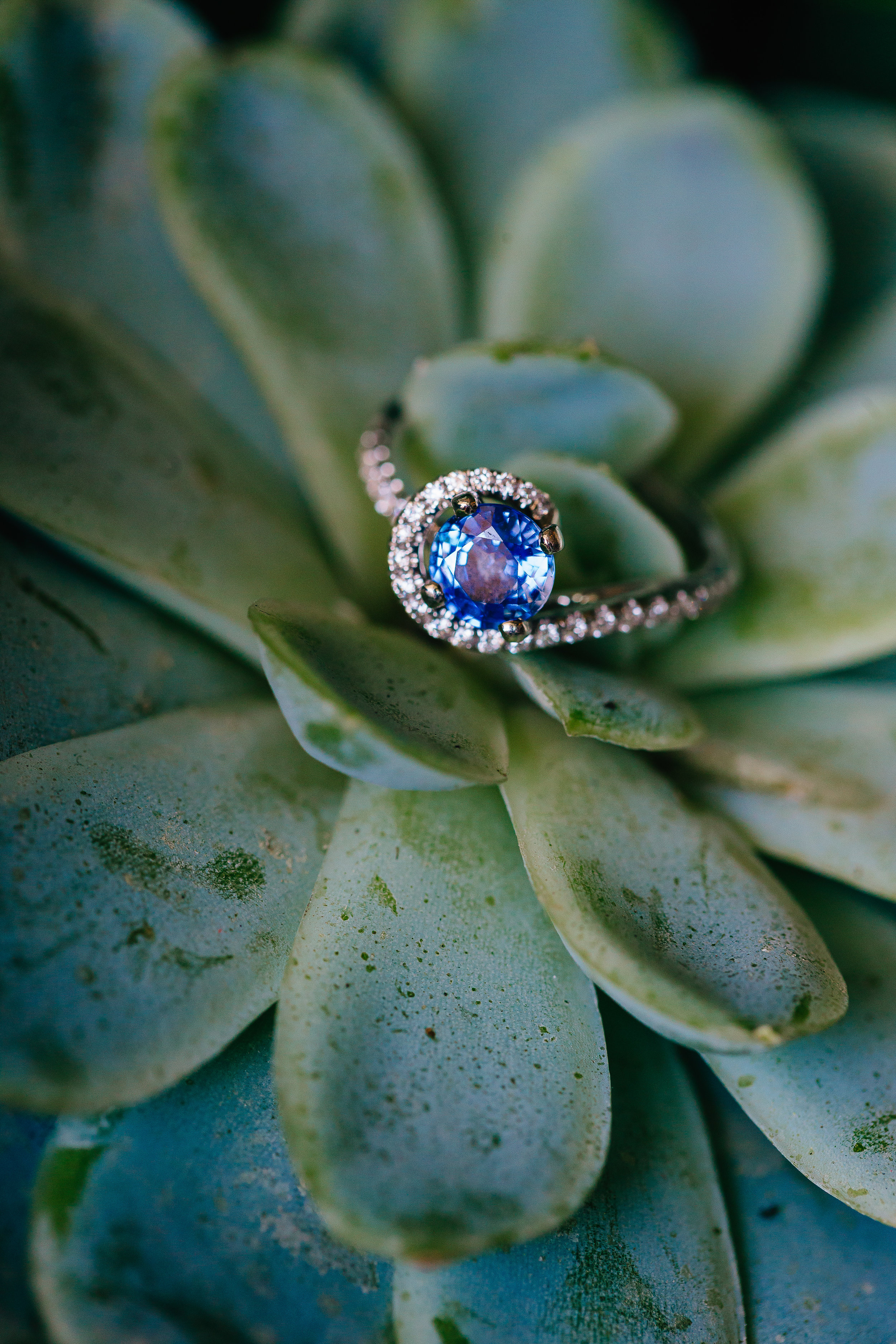 Desert Inspired Spring Wedding at Hotel Valley Ho - Succulent Ring Photo