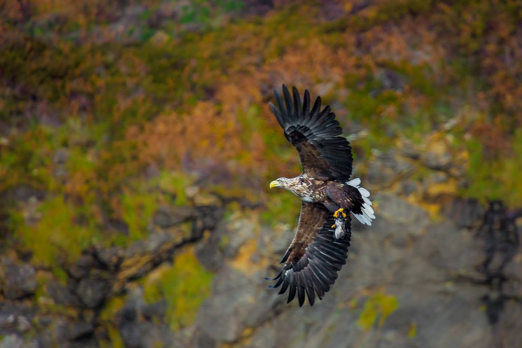 isle-of-skye-scotland-white-tailed-eagle-planning-itinerary-travel-photographer-videographer.jpg