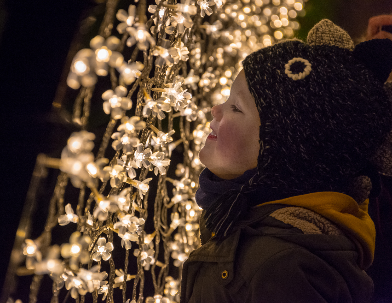 Edinburgh Botanic Gardens Christmas Light Show, December 2018