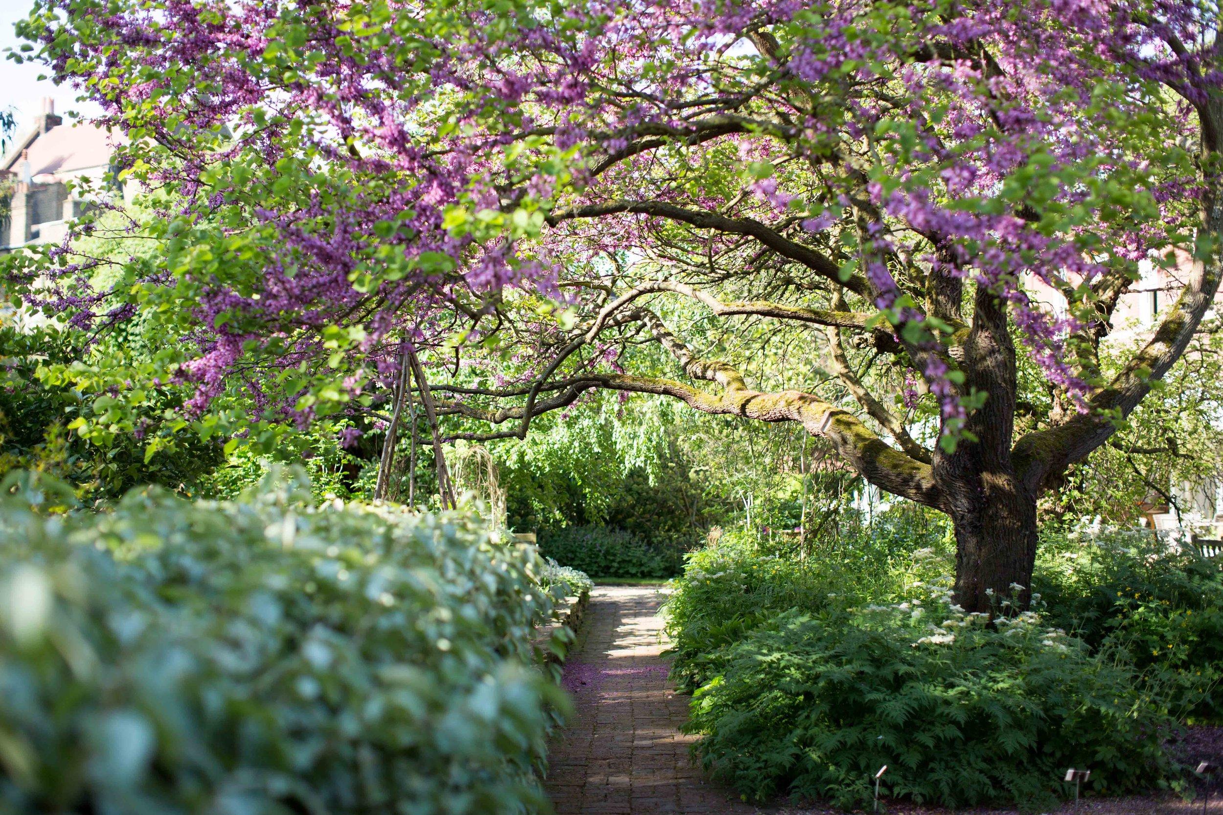 Secret garden.jpeg