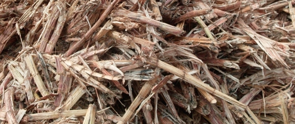 Sugar cane waste, known as bagesse