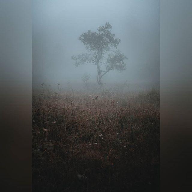 Ça faisait tellement longtemps que je n'étais pas allé dans la brume.  Un des meilleurs sentiments. Indescriptible. Tout est magnifique, mystérieux et silencieux. . . #paysage #tree #landscape #igersgrenoble #grenoble #isere #rhonealpes #landscape #fuji #fujifeed #fujifilm