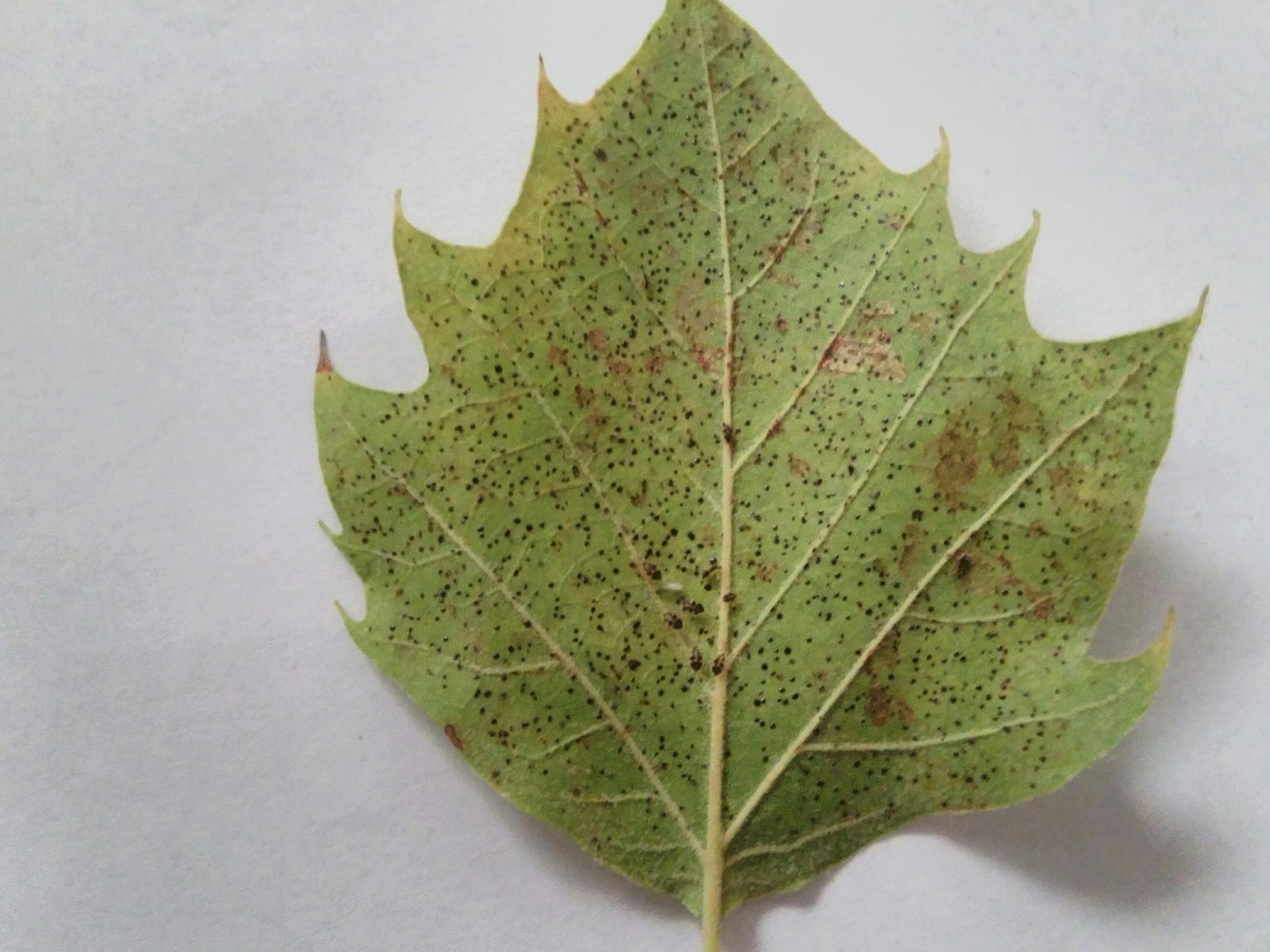 leaf with bugs.jpg