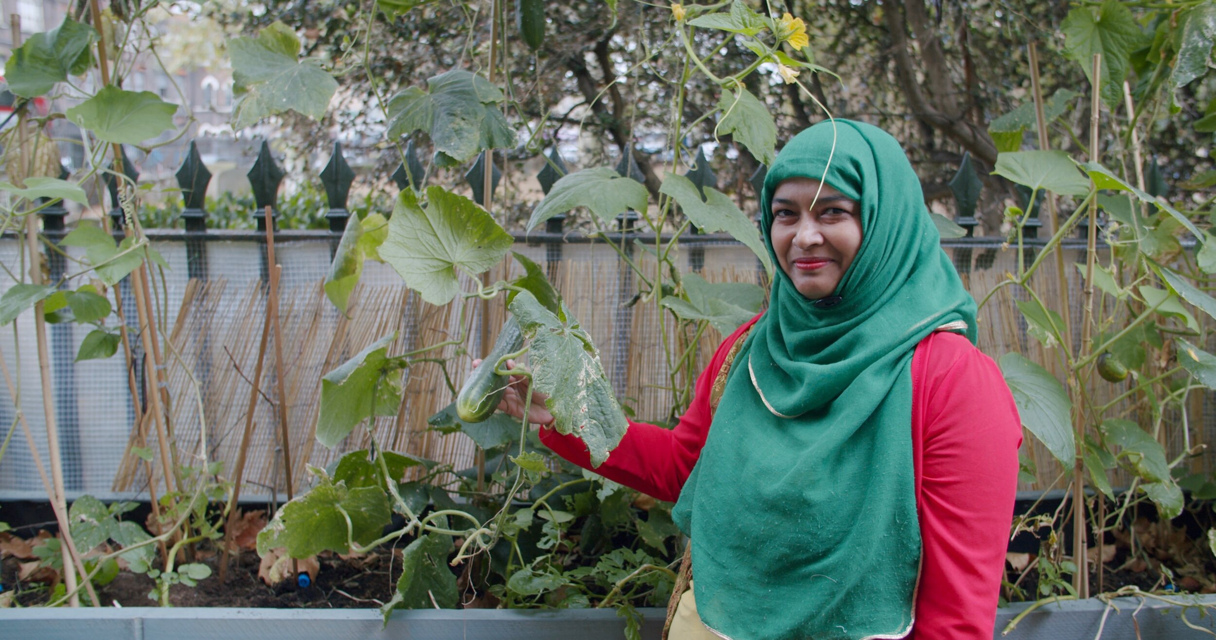 Selma, one of Deshi Shad, showing off the cucumbers she's growing. A good example of the ingenuity, resourcefulness, and skill so many Bengali women in Tower Hamlets have.