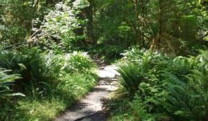blog_olympic-forest_fern_trail.jpg