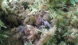 blog_olympic-forest_ferns2.jpg