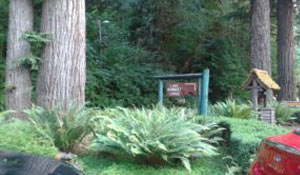 blog_olympic-forest_quinault.jpg