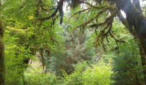 blog_olympic-forest_woods.jpg