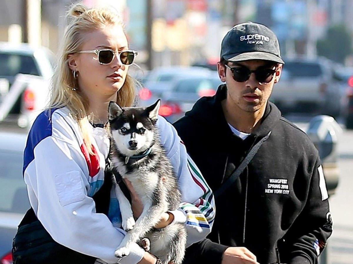 joe and sophie dog.jpg