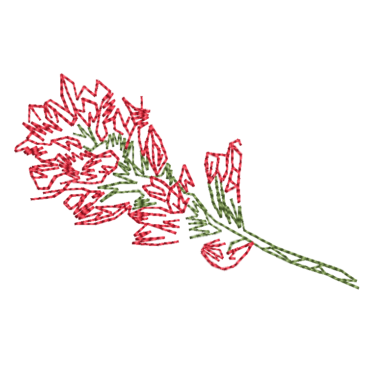 25. Indian Paintbrush