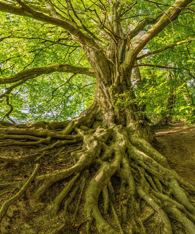 deep roots.jpeg