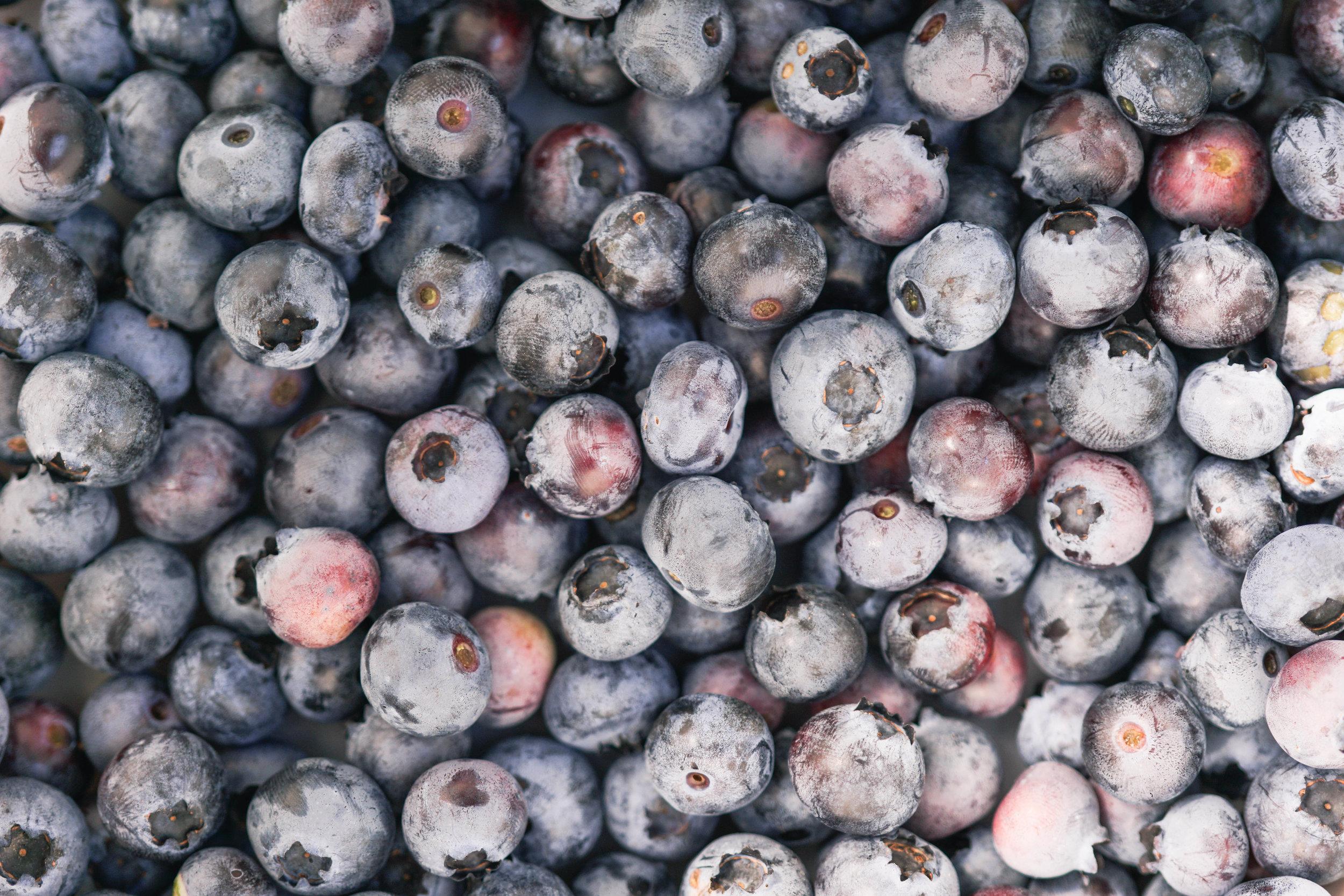 Blueberry Picking Adventure-16.jpg