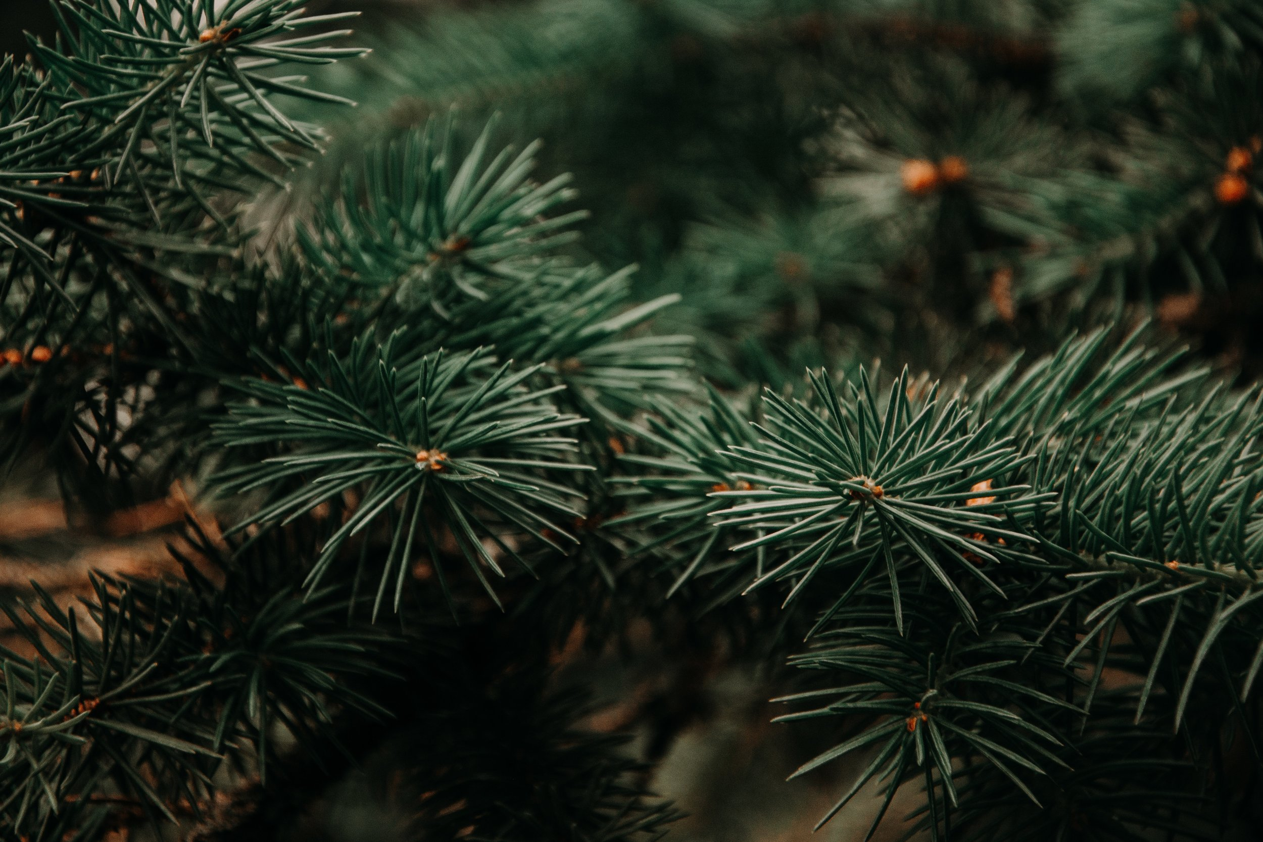 beautiful-blur-branch-943898.jpg