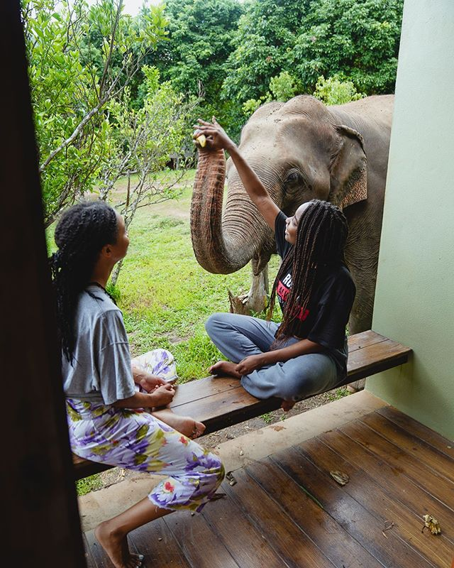 Morning wakeup call🐘🛎 Our Thailand take over is officially in Chiang Mai. 🇹🇭 Guess who came to welcome our guests! 🐘🐘 #chidiashleytravels