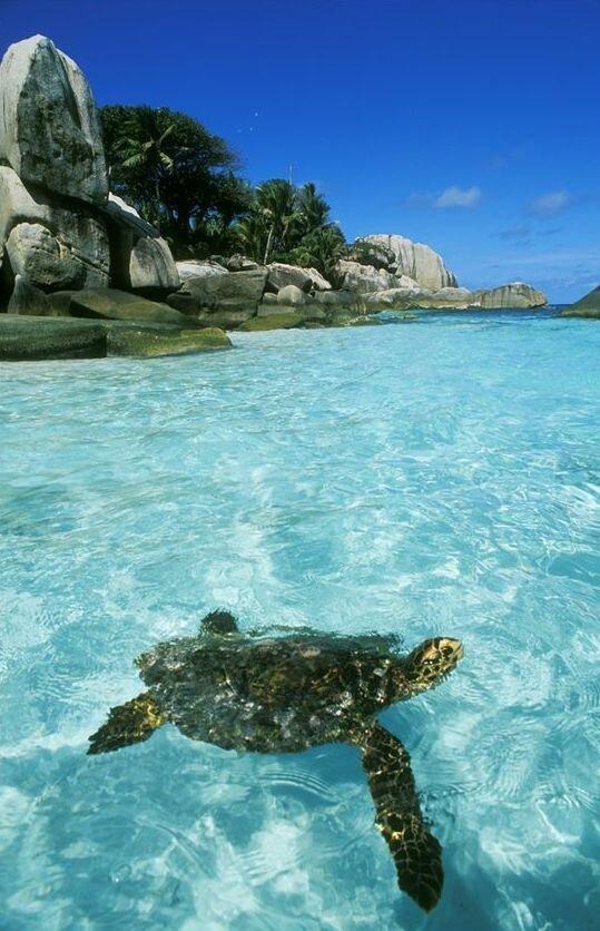 Cocos Island, Costa Rica, Mingling with Sea Turtles,.jpeg