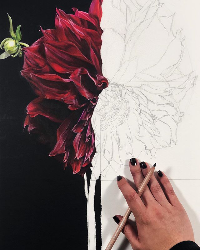 """I'm very much further along in this drawing than shown here, BUT. I had to share this picture, because I'm in love with this halfway point of the process where it's half sketch, half real flower popping out of the paper 😍😍😍 ⠀⠀⠀⠀⠀⠀⠀⠀⠀ • STILL AINT GOT NO NAME 100% colored pencil on white paper 22""""x22"""" DM to inquire (before my husband claims it for his personal collection) • • #nataliedarkart #artoftheday  #communityovercompetition #coloredpencil #creativemag #artistsoninstagram #onlinegallery #paintingoftheday #carveouttimeforart #prismacolor  #carandache #creativehappylife  #creativityfound #artworld #doitfortheprocess #artlover #artforhome #emergingartist #darkwalls #artadvisor #thehappynow #inspiredbypetals #dsart  #todaysartreport #contemporaryartcurators  #artcollector  #contemporaryart #buyartonline #botanicaldaydreams  #luminance @caran_dache @arches.art @prismacolor"""