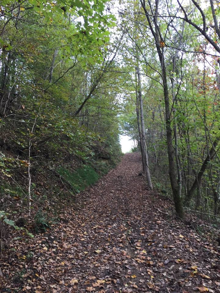 Perry Park Hiking Trails - Check out the new walking trails at the Perry County Park. You may enter the trails at the back of the softball field or at the horse ring. Trails are designed for several levels of hiking experience.