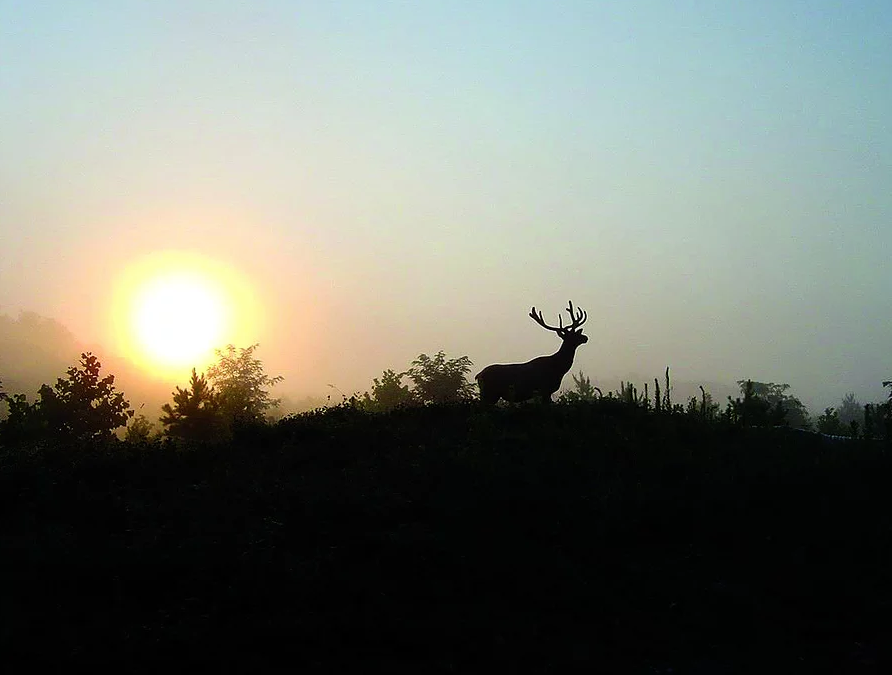 All Terrain Elk Tours - Perry CountyElk tours at their finest. Each tour personalized just for you. Get closer to the elk than you ever thought possible!606-436-2635 or 606-233-7470