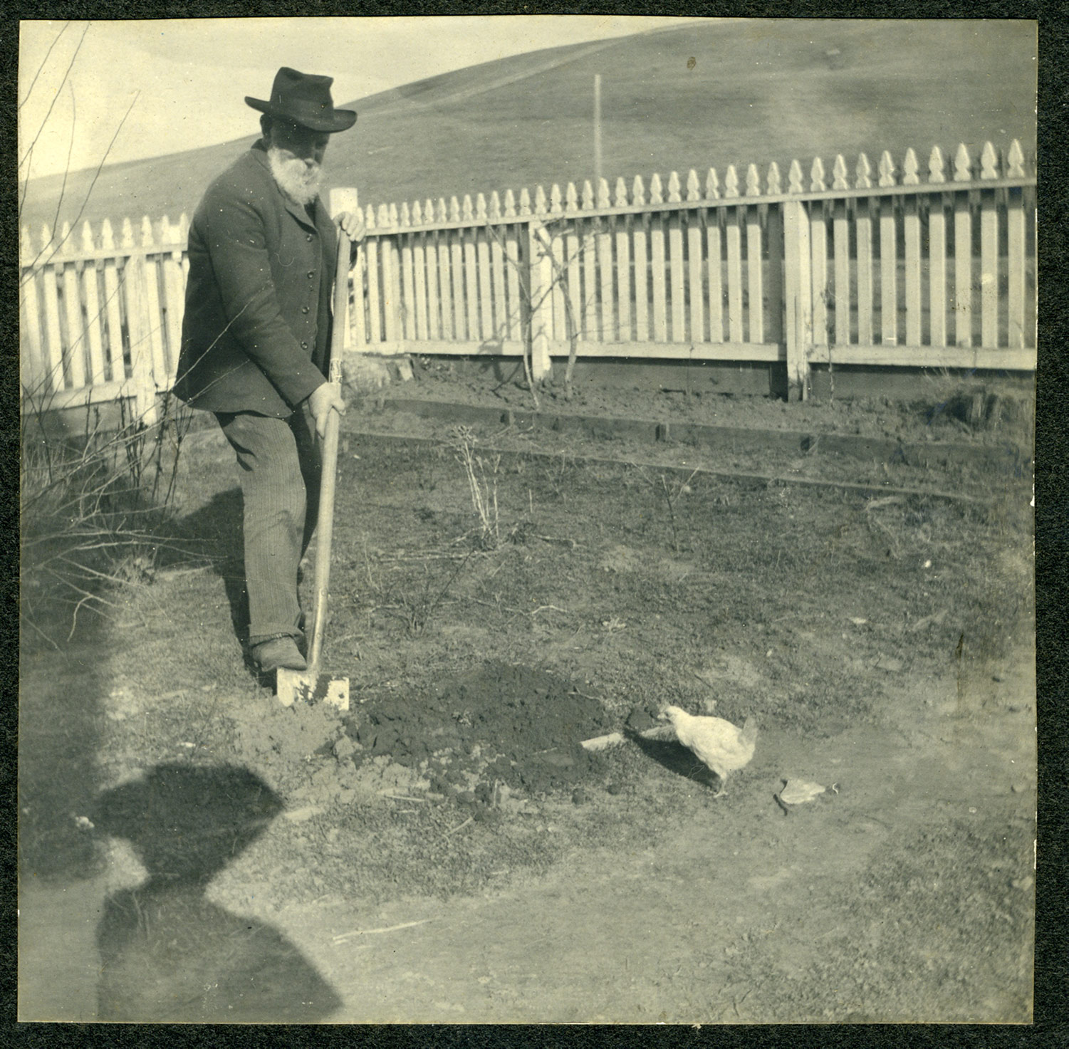 Thomas Ables Digging with Chicken