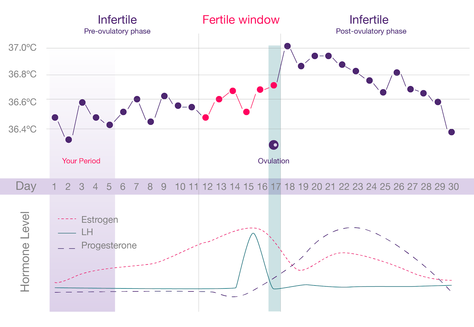 An example of a woman's menstrual cycle, though every woman's is different, similar to those used as a model for fertility tracking apps. There is no 'safe' time of any cycle to have unprotected sex.