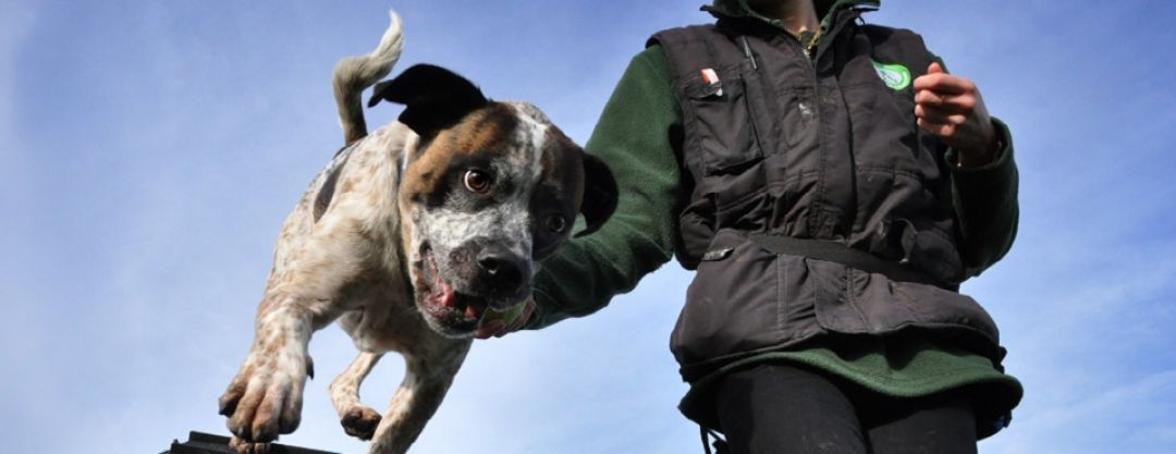 Edinburgh Cats and Dogs Home: Collection Can Coordinator