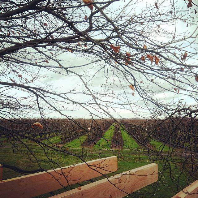 Werken met zicht #komorebi #treehouse #boomhutten #haspengouw