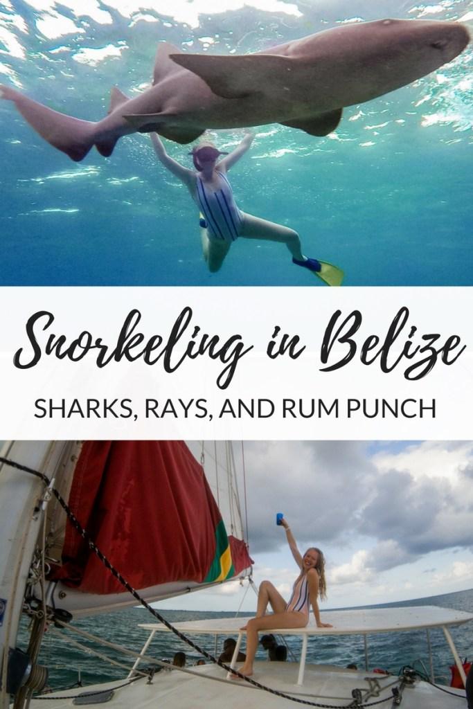 Sharks-rays-and-rum-punch.jpg
