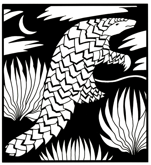 Pangolin  Available as signed giclee print, 20cm sq (no mount)