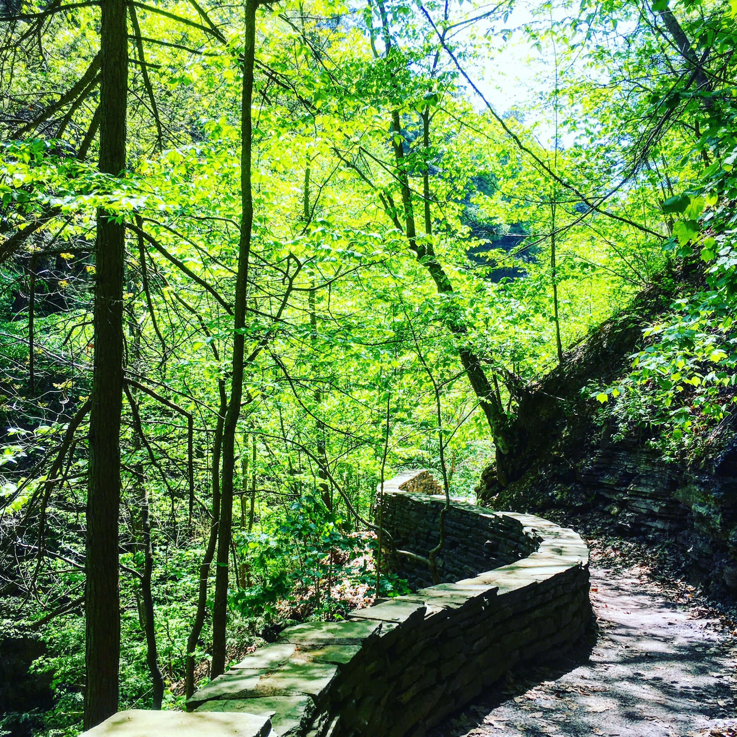 The beautiful Burnt Hill Loop in the Finger Lakes National Forest