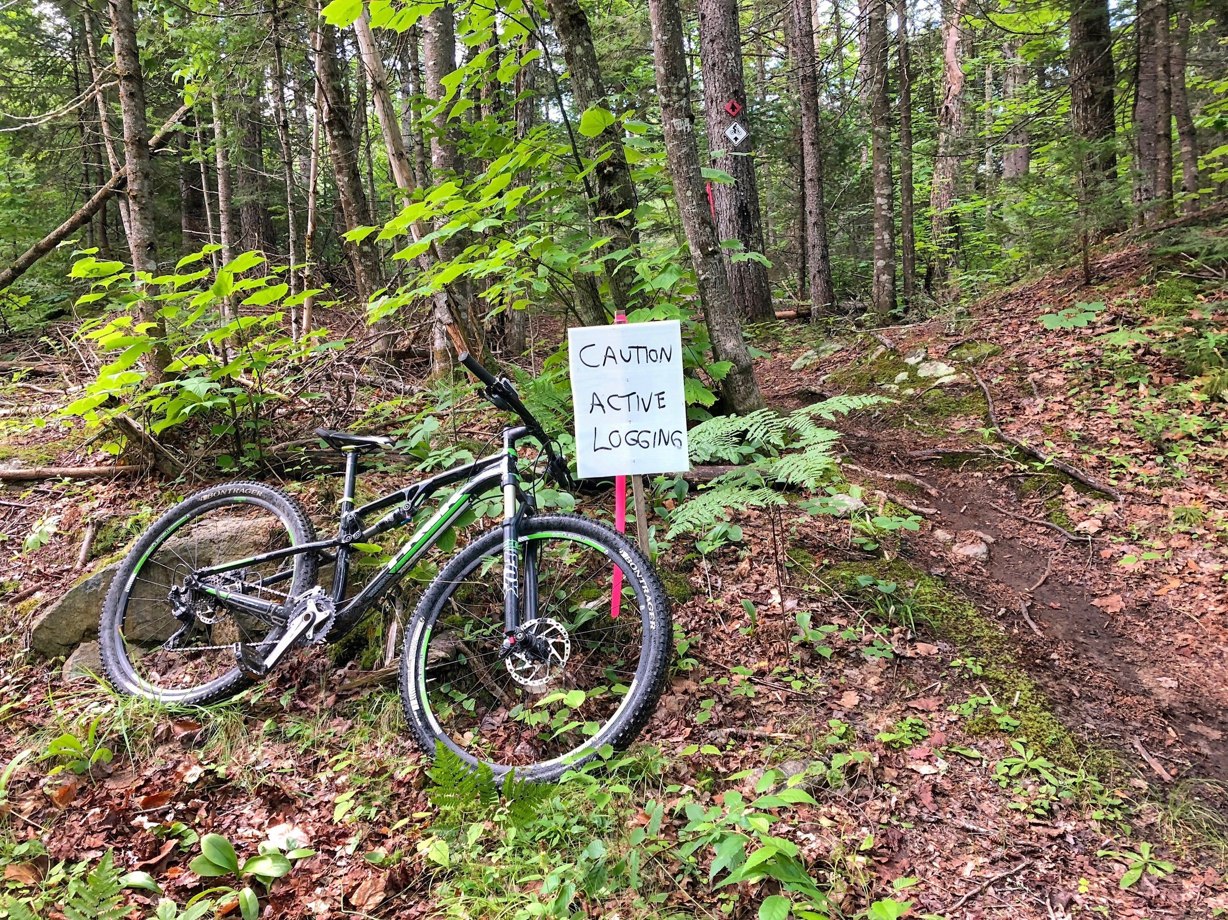 Mountain biking and timber harvesting go hand in hand in Carrabassett Valley. Photo courtesy of the Carrabassett Region New England Mountain Biking Association.