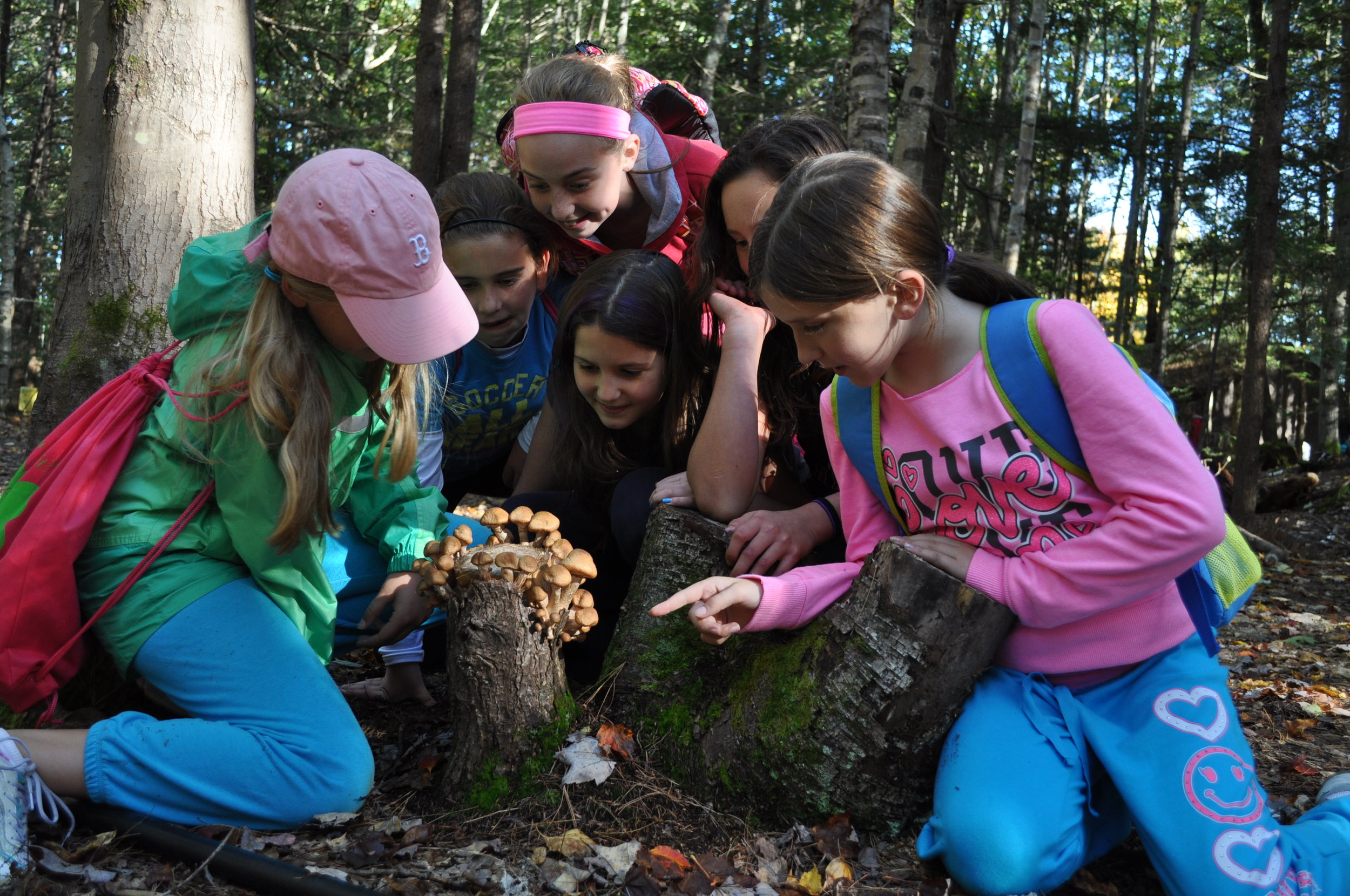 At the Ecology School students are encouraged to follow their curiosity and use the things they discover in nature as tools to dig deeper into science and environmental connections. As they learn about the FBI (Fungus, Bacteria, Invertebrates) of the forest, these young ecologists look a little closer at the mushrooms sprouting from a down tree's trunk to investigate its role in the forest's life cycle.  Photo courtesy of the Ecology School.