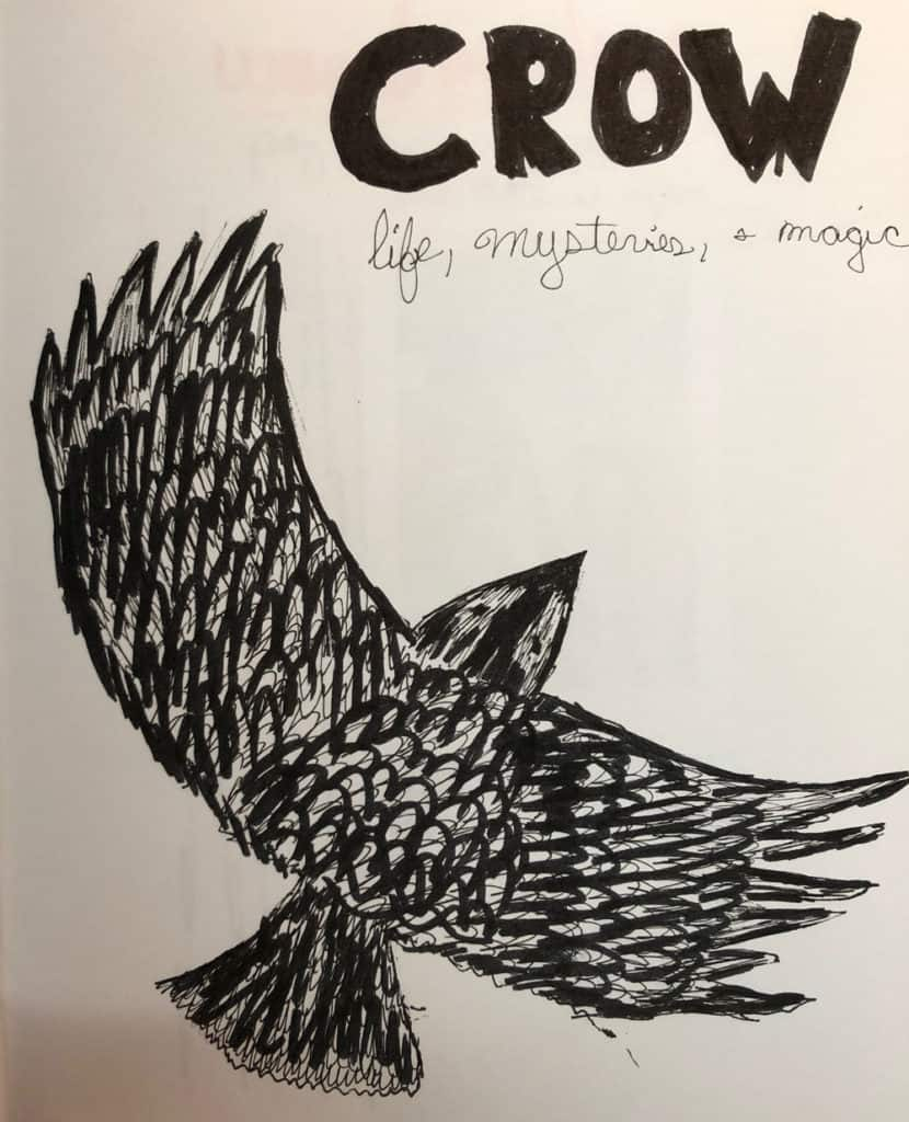 crow animal guide