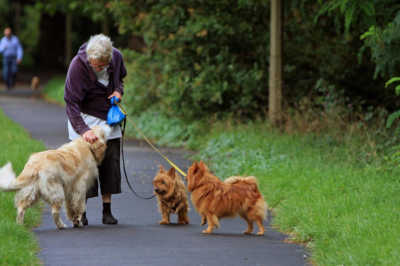 seniorwithdogaustralian-terrier-164087_1280.jpg