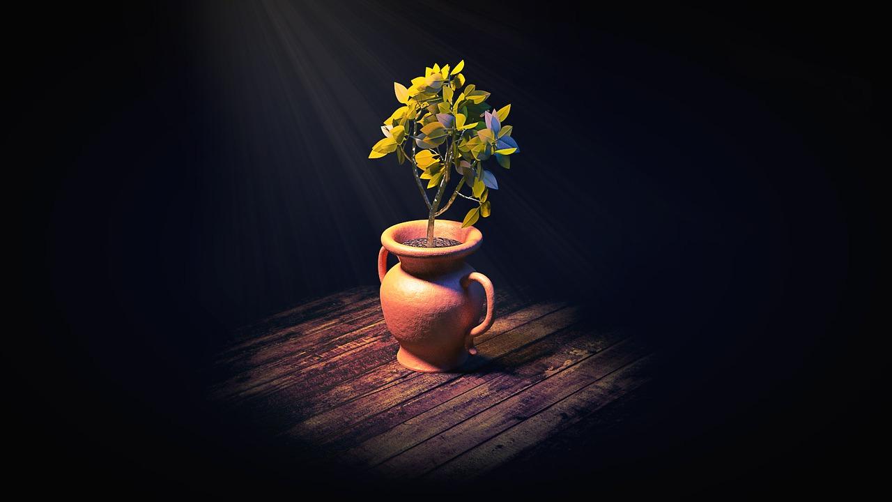 houseplant-2056357_1280.jpg