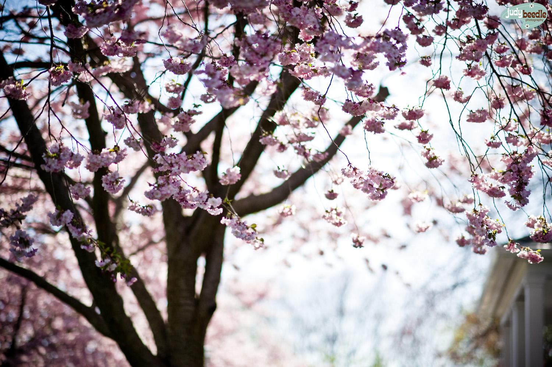 5/6. Hi Spring!