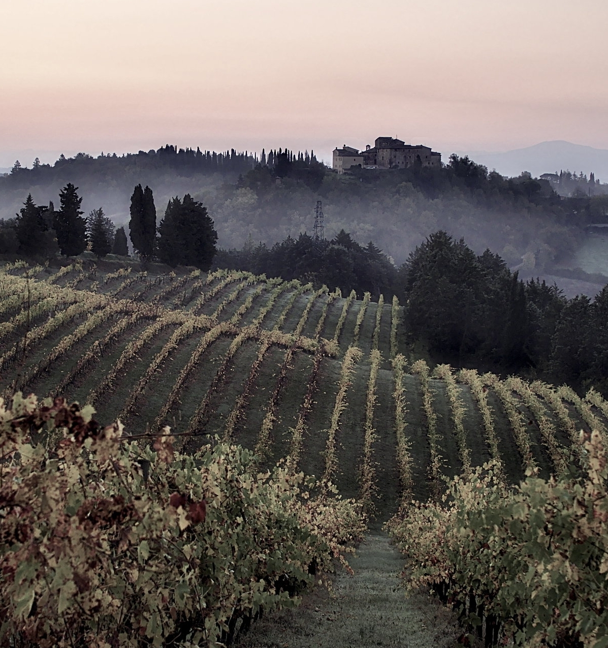 Vineyards_in_Tuscany_quality_image.jpg