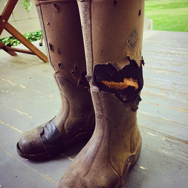 Retiring these bad boys after 8 yrs on the ranch! 🤠 And yes that is duck tape.  #muckboots #ranchlife #knowyourrancher #cattlerancher #visitrappahannockva