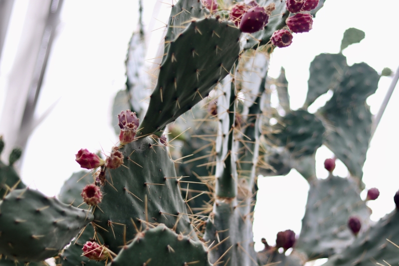 botanical-cactus-cactus-plant-1561234.jpg