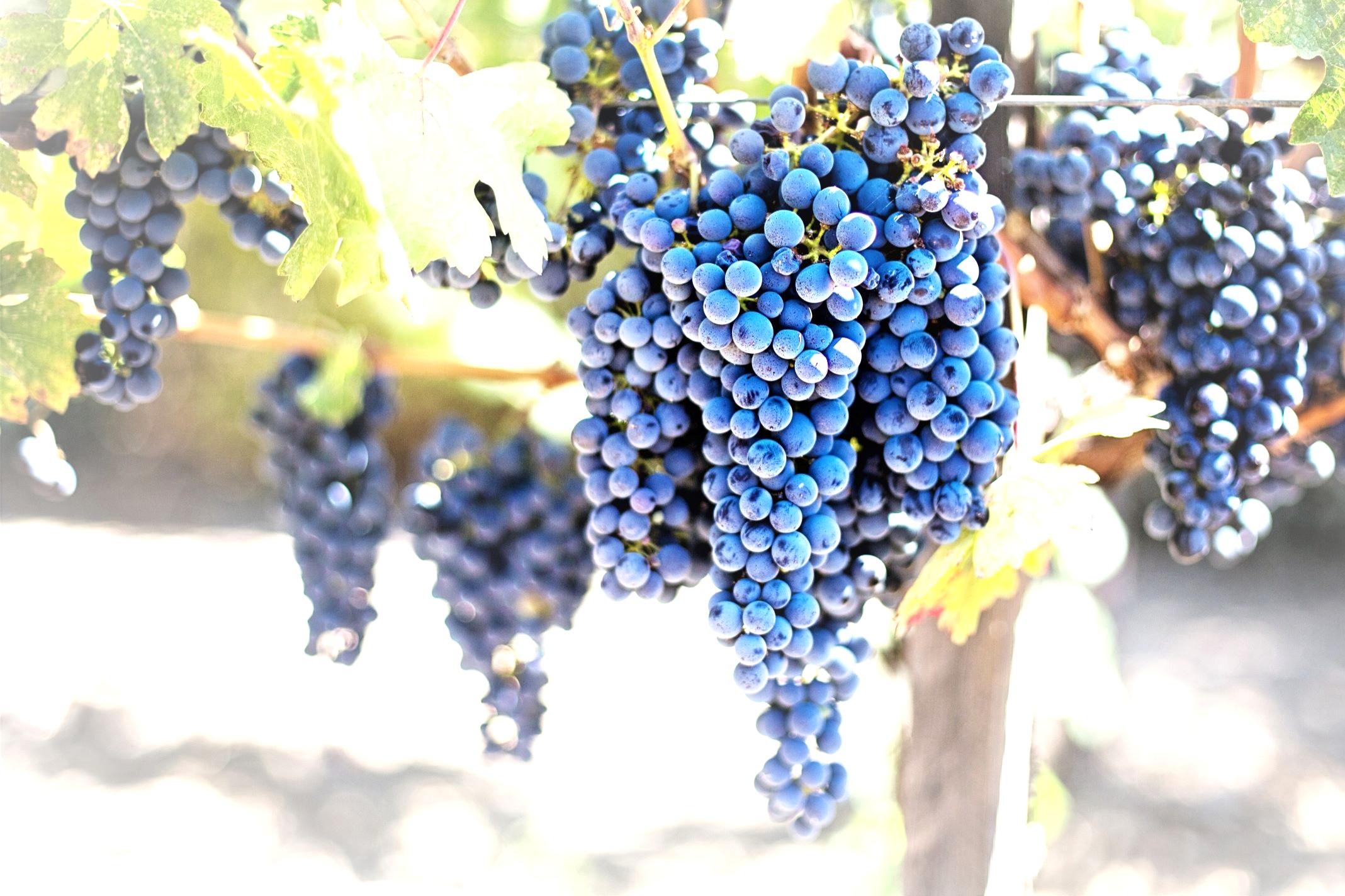 fruits-grapes-grapevines-45209.jpg