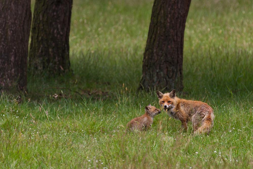 dieren 20140614-IMG_8524kopie.jpg