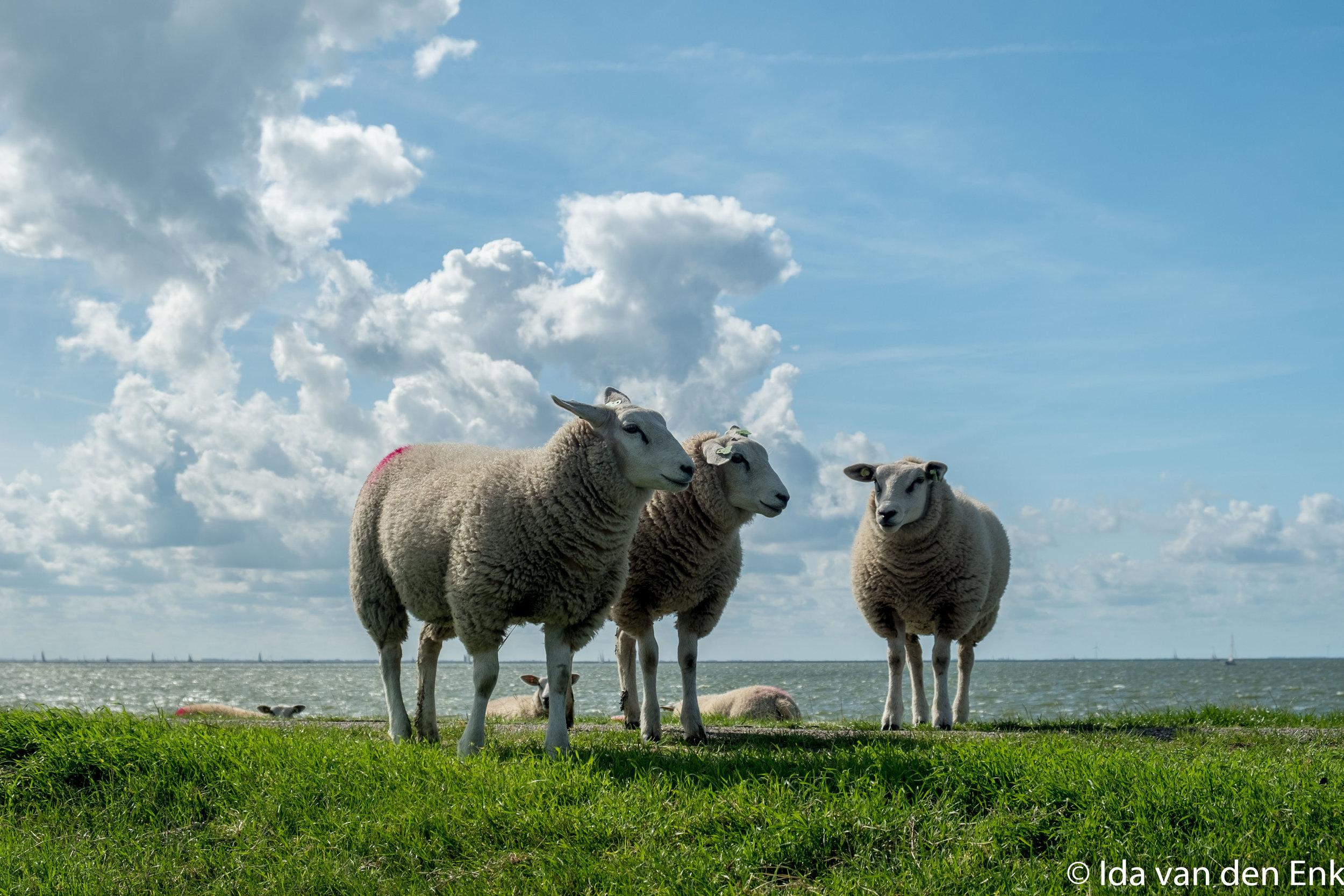 Jaaruitje Friesland