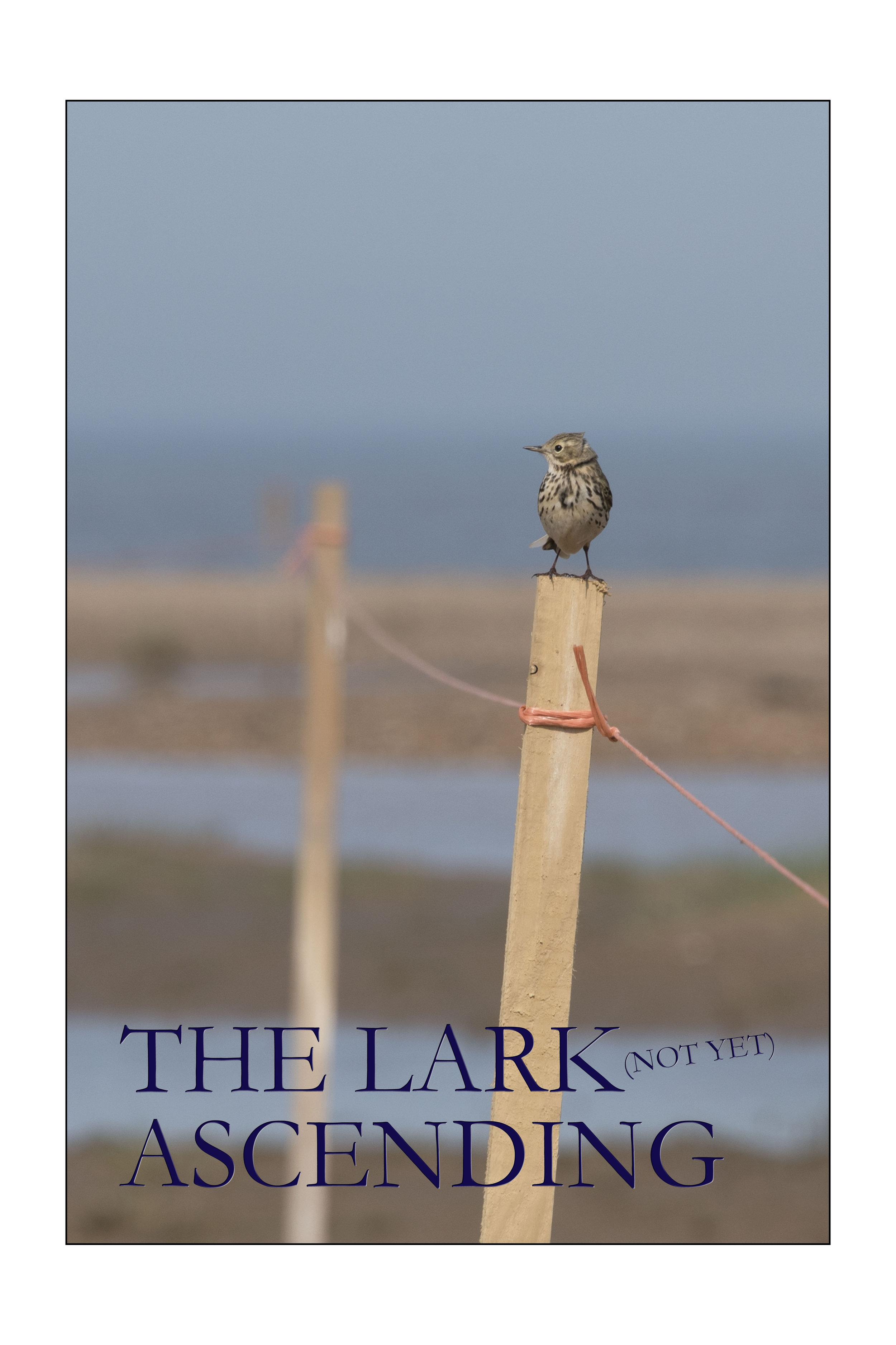 The Lark Ascending MET RAND.jpg