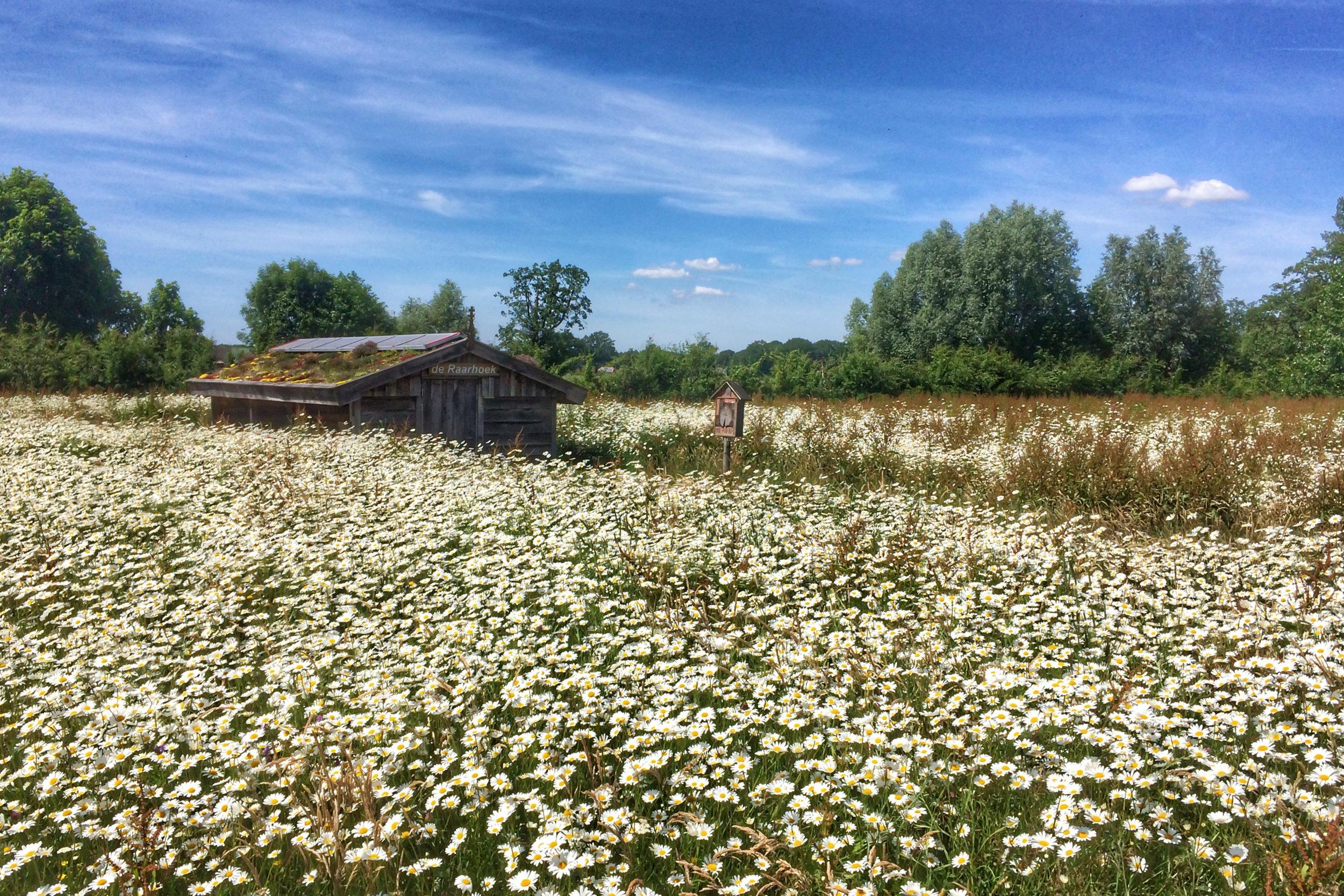De winnende foto van Ida van den Enk. Het onderwerp: het dorpsbos in Raalte Noord